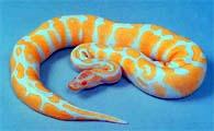 albinismo3
