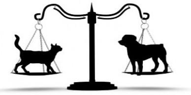 animal_law