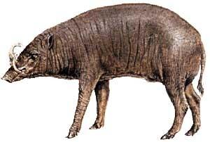 babiruca