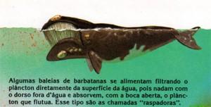baleia001