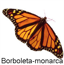 borboleta_monarca