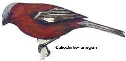 caboclinho