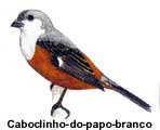 caboclinho_banco