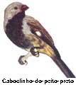 caboclinho_ferrugem