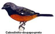 caboclinho_preto