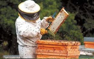destaque_apicultura