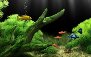 destaque_aquario_agua_doce