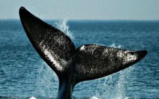 destaque_baleias