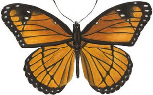 destaque_borboleta