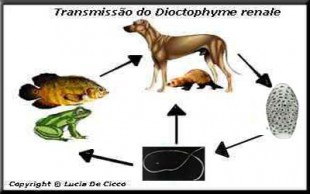 destaque_dioctofimose