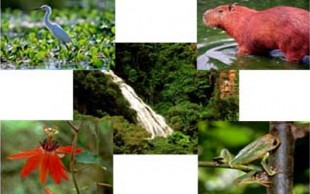 destaque_ecologia