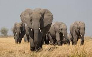 destaque_elefante