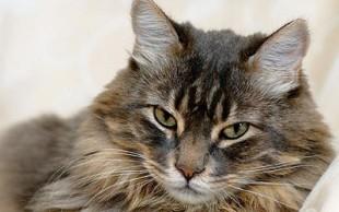 destaque_gato