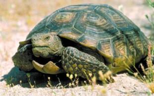destaque_tartaruga