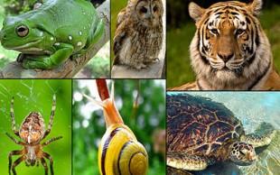 destaque_zoologia