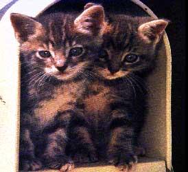 dois_gatos