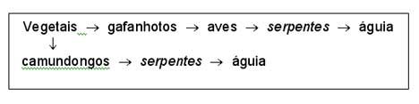 ecologia03