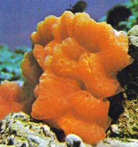 esponja-de-vidro-001
