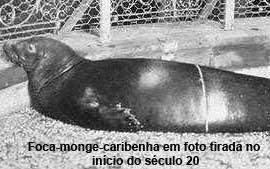foca_monge_caribe