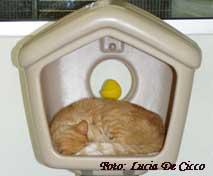 primeiro_animal_gato2