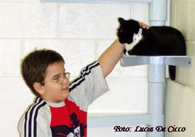 primeiro_animal_gato5