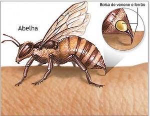 Veneno abelha