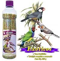 alcon_club_passaros_exoticos
