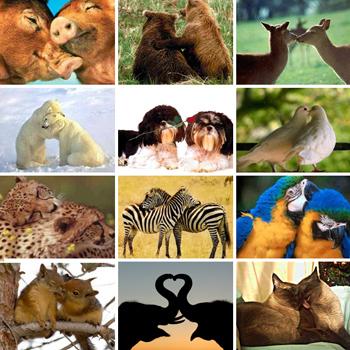 amor_animal2