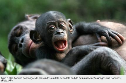 bonobo2