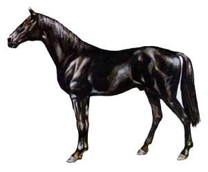bulgaro