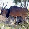 chamada_eland