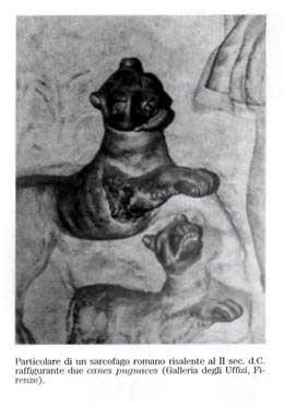 Sarcófago romano do IIº século, representando dois canes pugnaces – galeria degli Uffizi, Florença