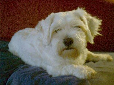 daisy_dog