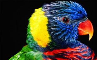 destaque_aves_mundo
