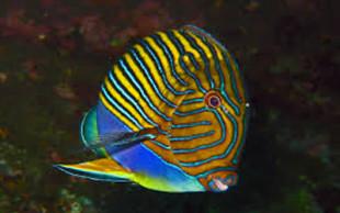 destaque_blobfish2