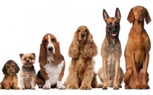 destaque_dogs2
