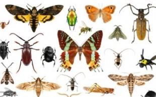 destaque_insetos