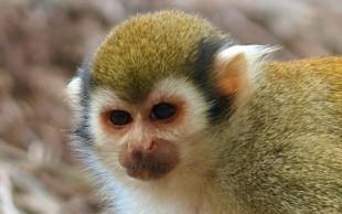 destaque_macaco_cheiro