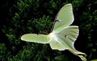 destaque_mariposa