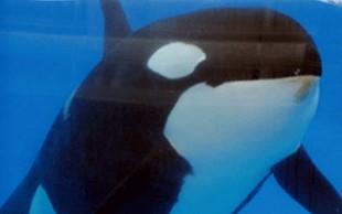 destaque_orca