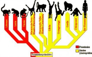destaque_primatas