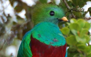 destaque_quetzal