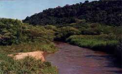 ecologia04
