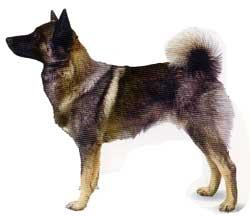 elkhound2