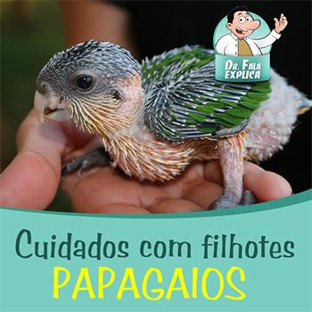 filhote_papagaio_alcon