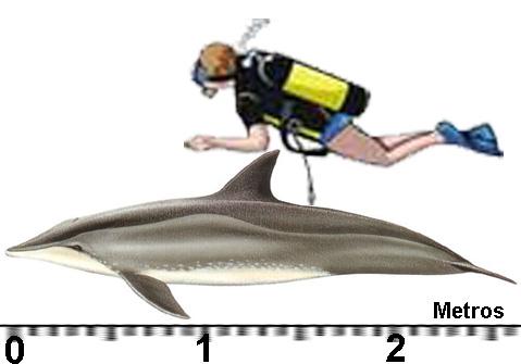 golfinho-de-dentres