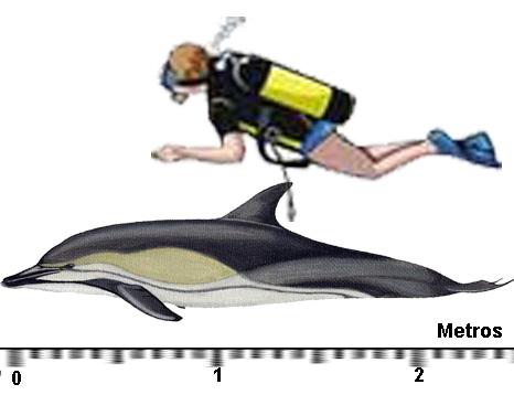 golfinho_comum