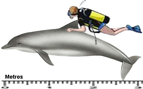 golfinho_maior