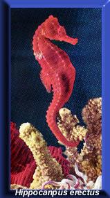 Peixes marinho fam lia syngnathidae sa de animal Aquarium familia numerosa