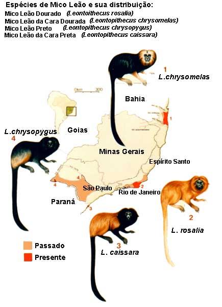 mico_cara_preta2